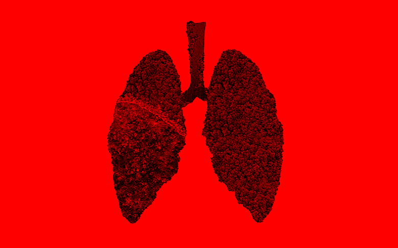 How can we repair the lungs of the planet?