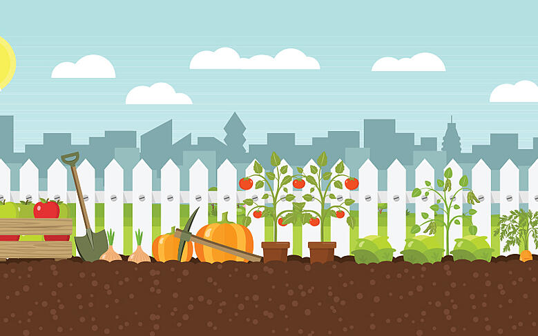 The trials and tribulations of a wannabe urban gardener