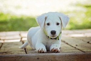 Best Dog Parks Near Fulbrook on Fulshear Creek