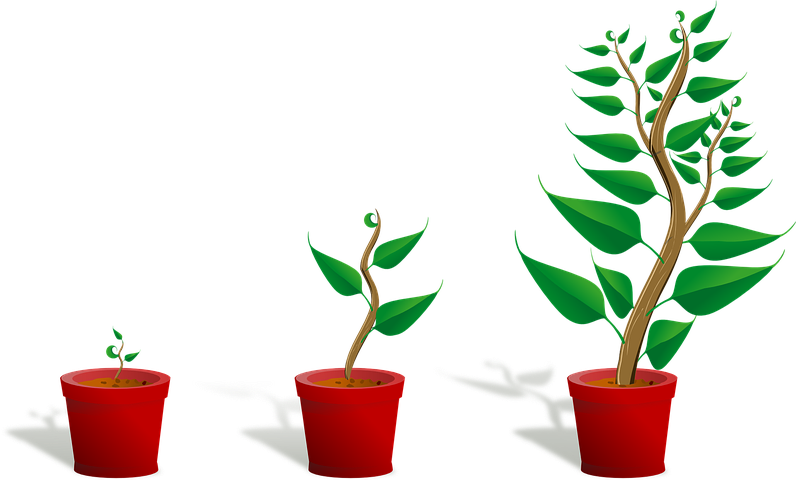 sapling - growth.png