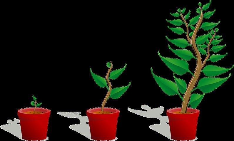 sapling - growth.png