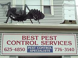 Best Pest Control Servies Somerville MA, Buying a home in MA, MA Real Estate