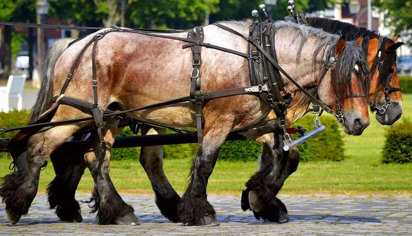 Top 10 Legal Docs - The Work Horses