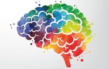 hersenen-featured