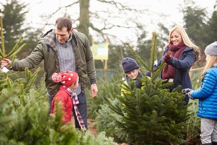 Live Christmas Trees and Bugs