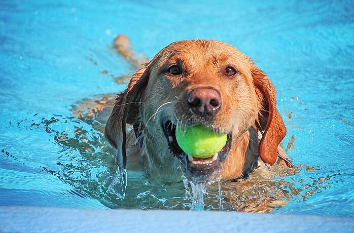 Help Your Pets Keep Their Cool