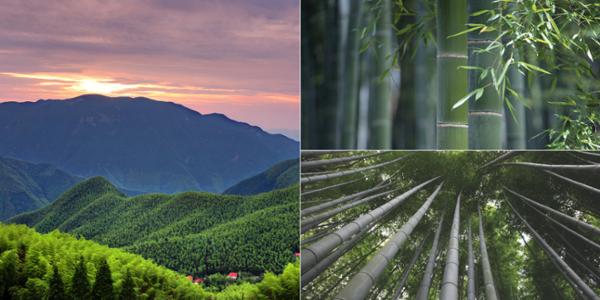 booming bambus