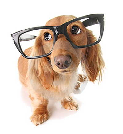 smart-dog-thumb8552068.jpg