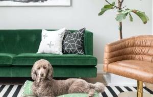 Janery Pet Beds