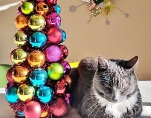 MCM Christmas Trees