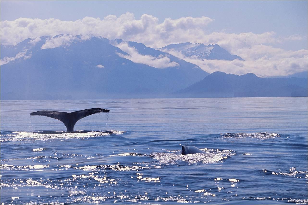 Alaskan Mountainous Coast