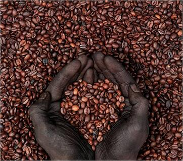loved import coffee beans