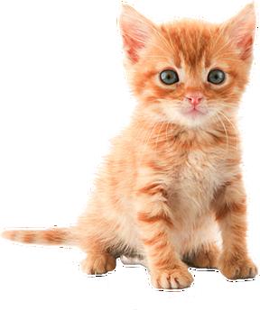 cute kitten public domain