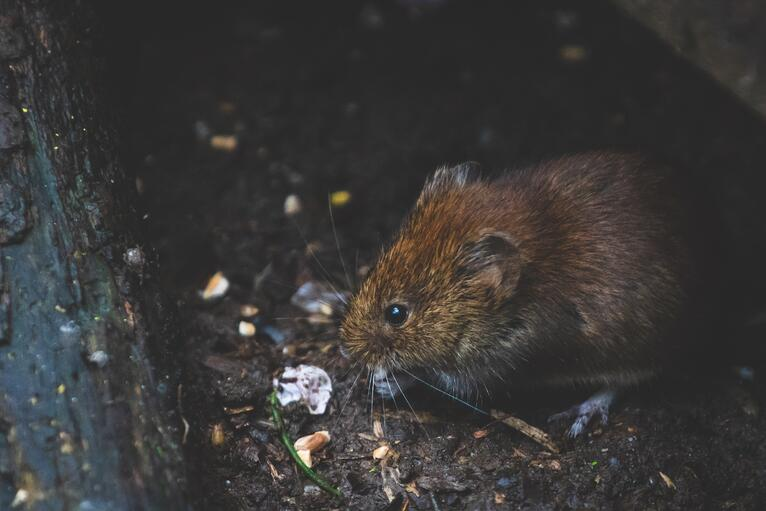 Pest Control: Reasons To Call In Professionals