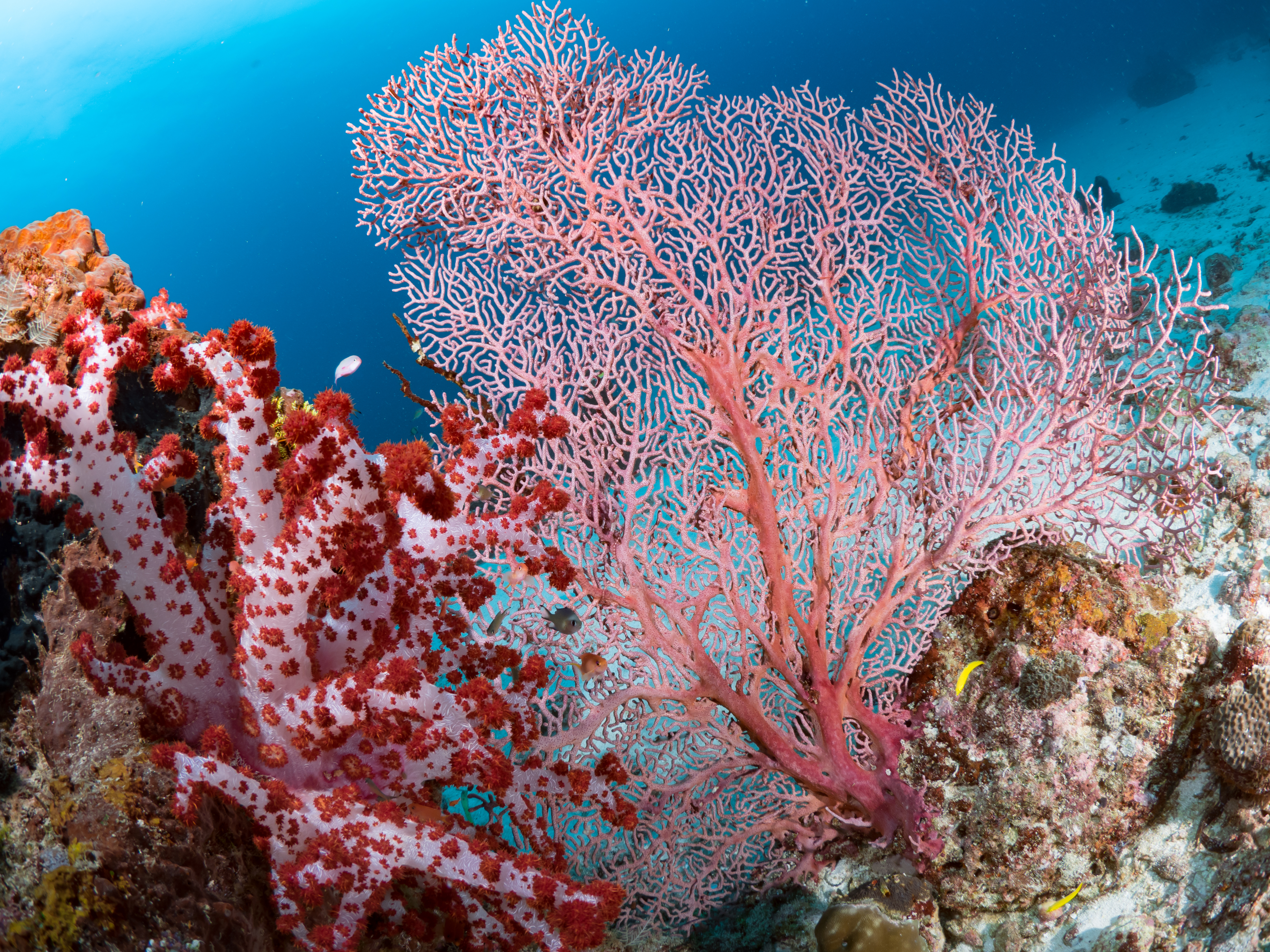 Featured Image Living Coral
