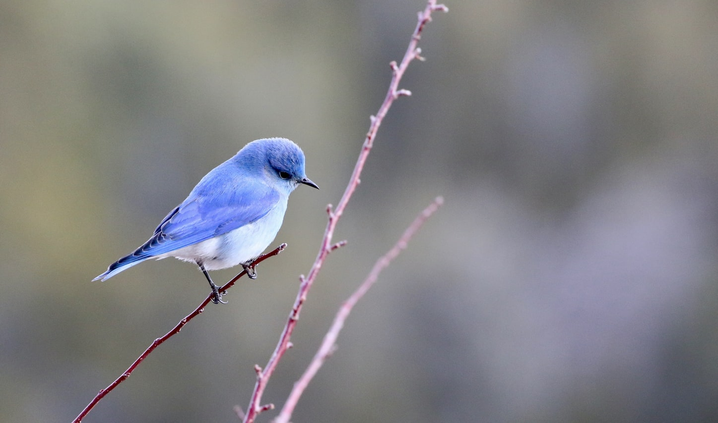 blue bird that looks like the Twitter logo