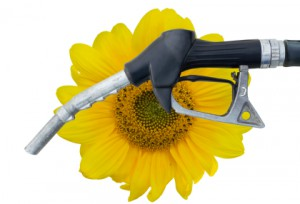 Biofuel-300x204