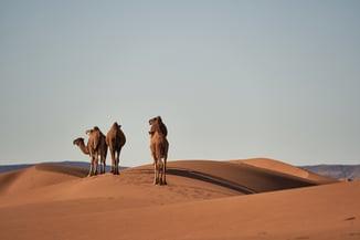 desert-4134934_1920