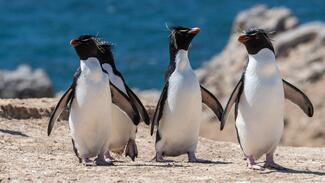 a group of penguins on the beach