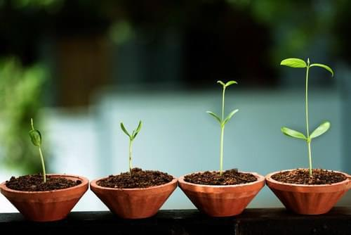 Grow something & nuture it, fertility appears