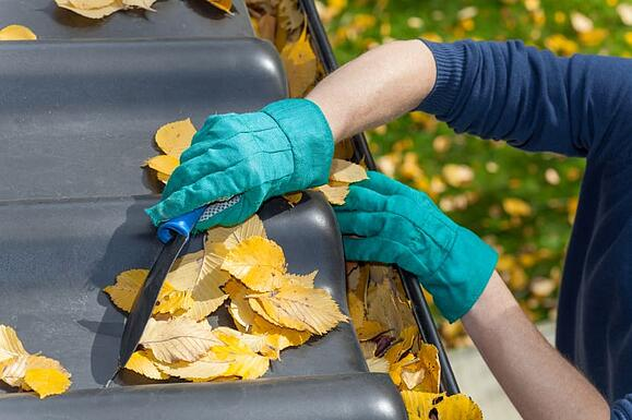 Clean Gutters Prevent Pests!