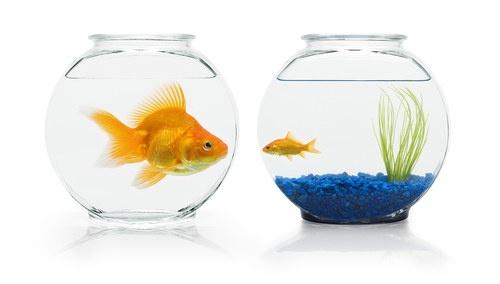 Scarcity and Abundance Thinking