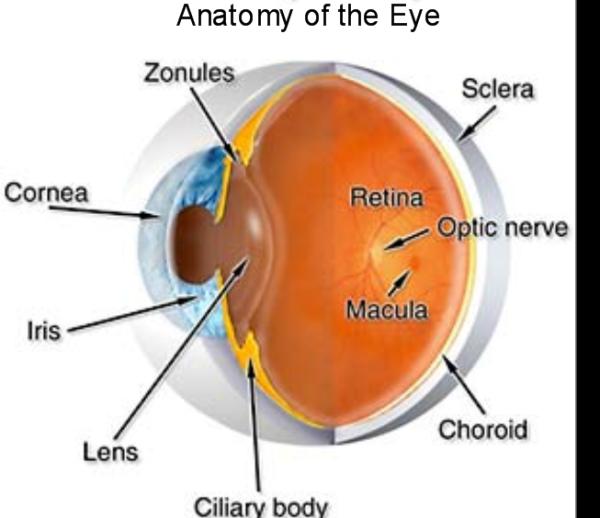 Anatomy of the eye diagram