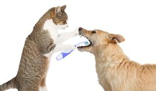 Gesundheitstipp-Tiere-Zahnfleisch