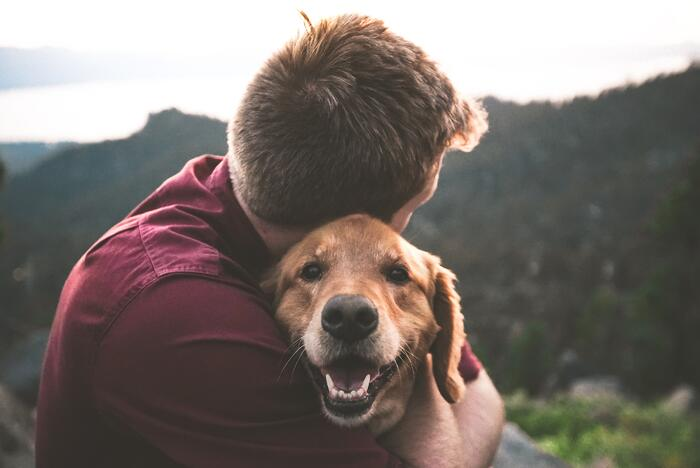 How Signals Analytics helped one of the world's largest petcare companies slash their time to market and beat the odds.
