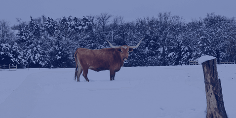 10 Tips for Winterizing Your Home in Texas