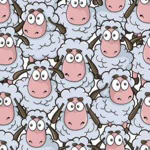 Sheep_1465730285-e1584622143724