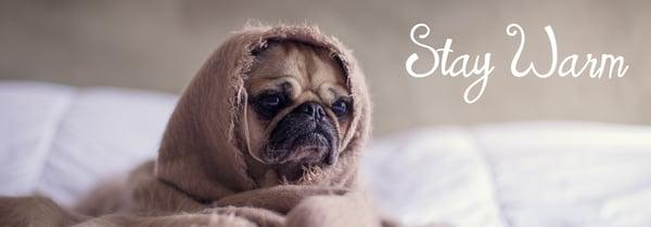 pug-1210025_1920 (stay warm)
