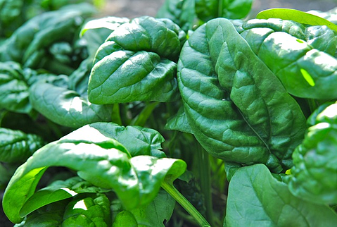 Spinach is a Superfood!