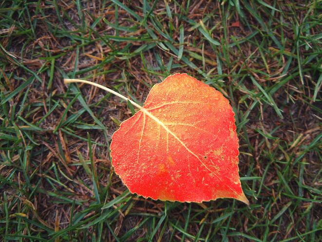 Networking Tips for Taking Advantage of Fall