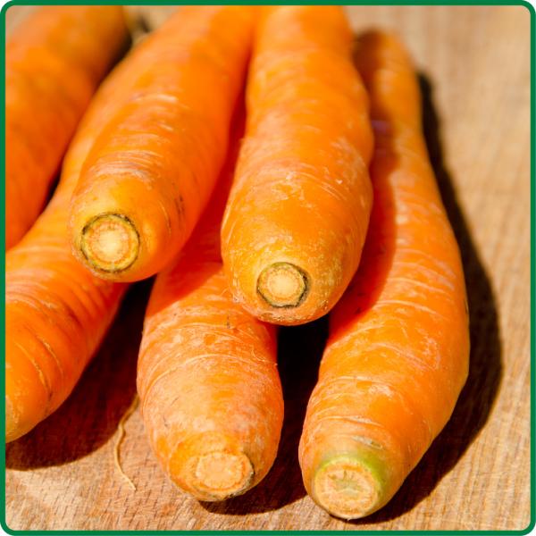 Organic Carrots Bulk Carrots Bulk Bagged From