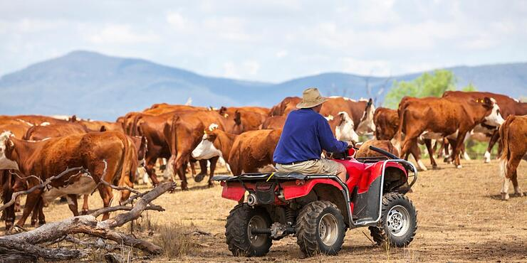 australian-farmer-on-quad-bike-with-cattle-picture-id493477468 (2)