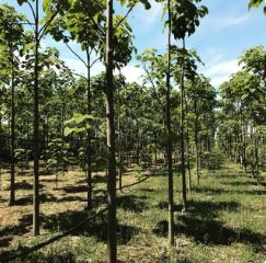Seeing the Wood for the Trees: Turning forest into an investable, bankable asset