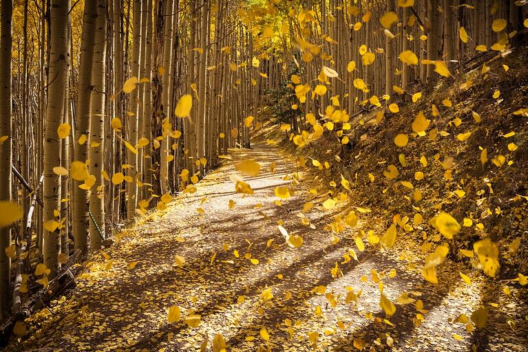 A Beginner's Guide to Autumn Photography