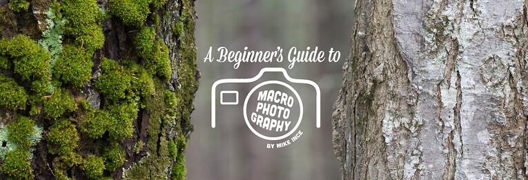 A Beginner's Guide to Macro Photography