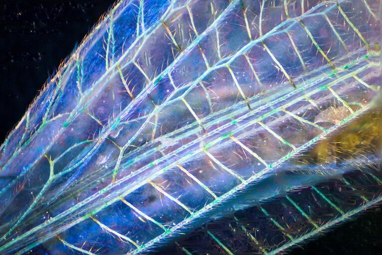 The Hidden World of Photomicrography