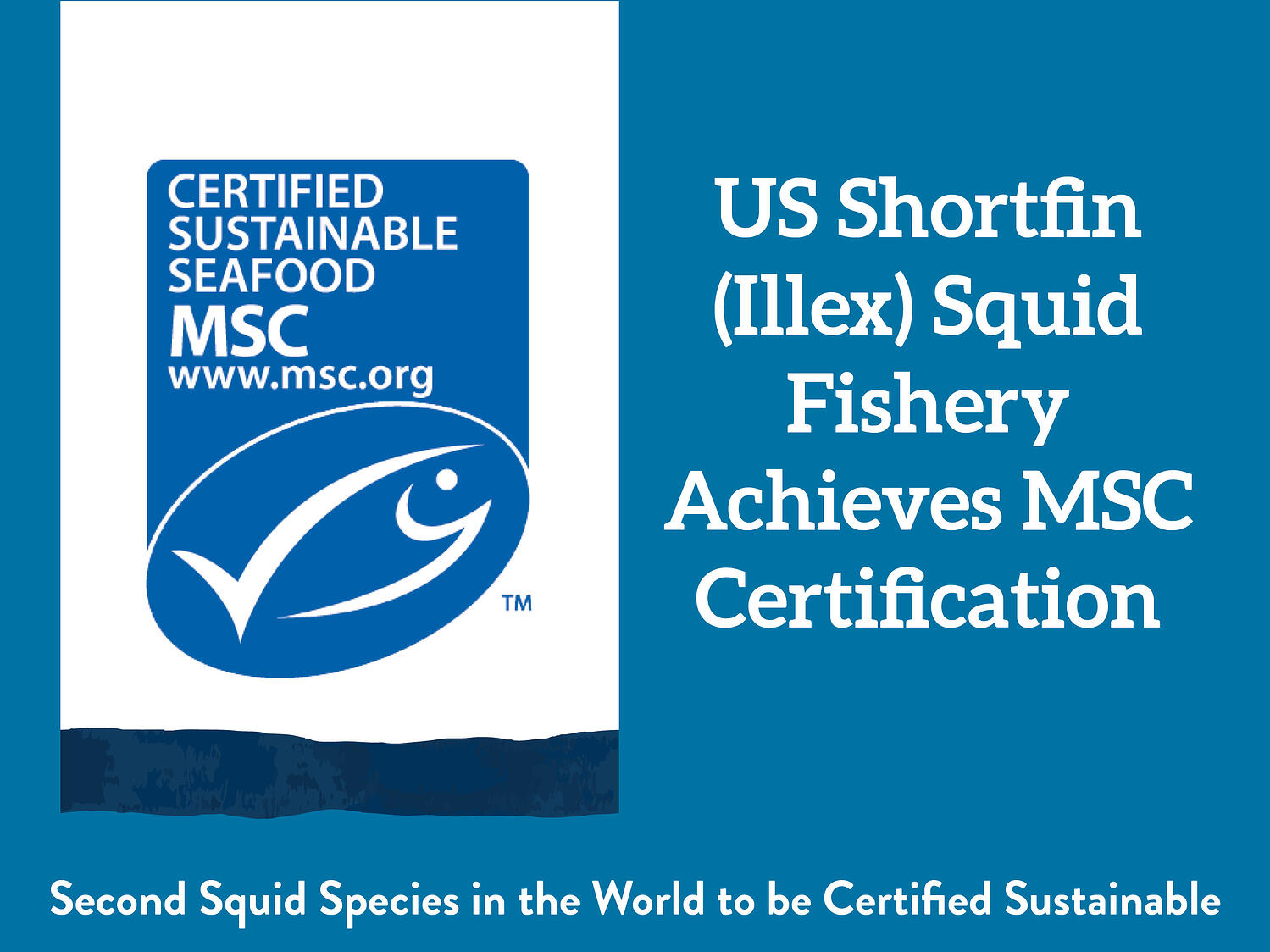 US Shortfin (Illex) Squid Fishery Achieves MSC Certification