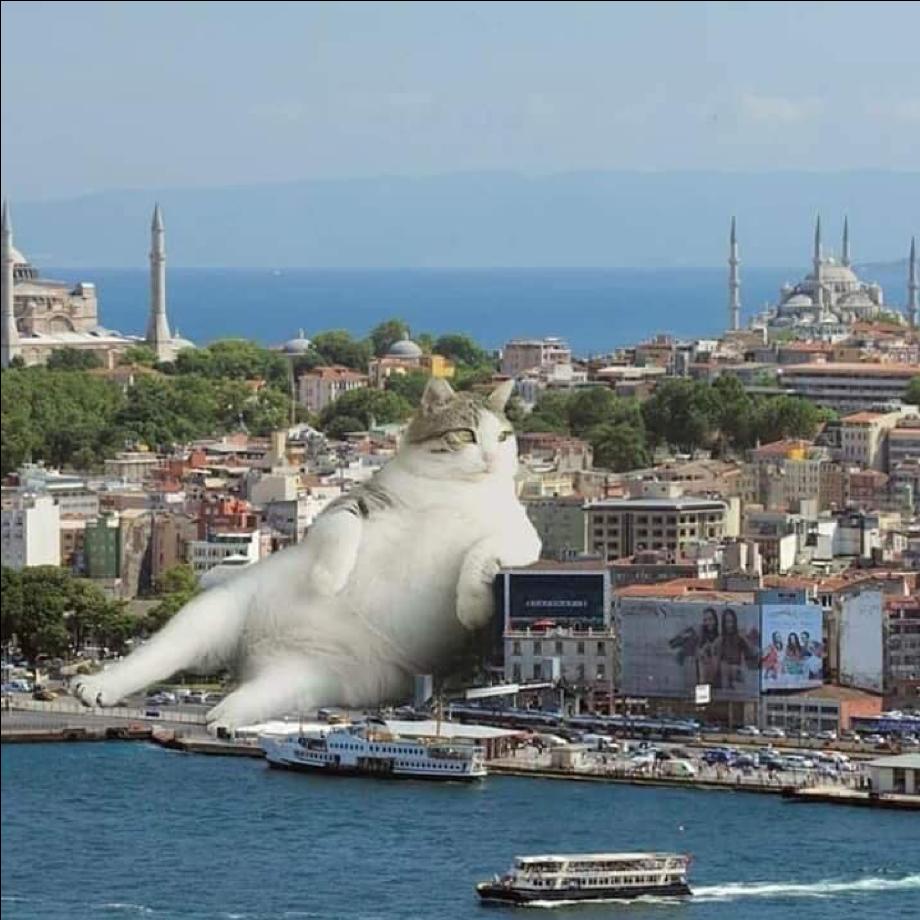 Tombili the Turkish cat, photoshopped to Godzilla-like proportions, lounging on the Istanbul skyline.