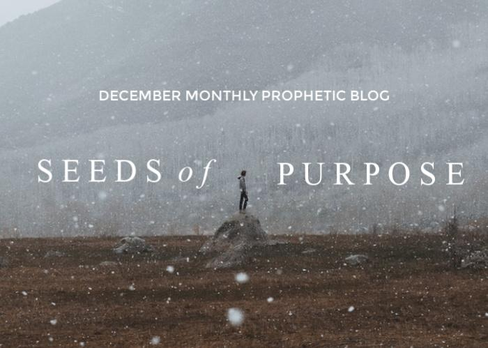 Seeds of Purpose | December Monthly Blog