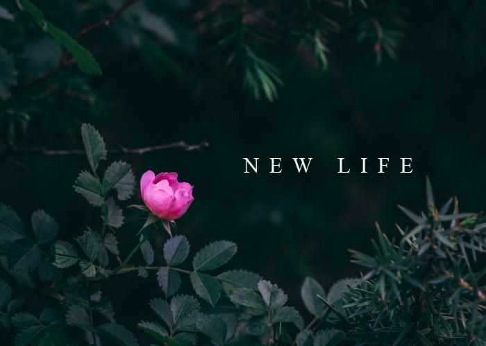 New Life | June Monthly Blog