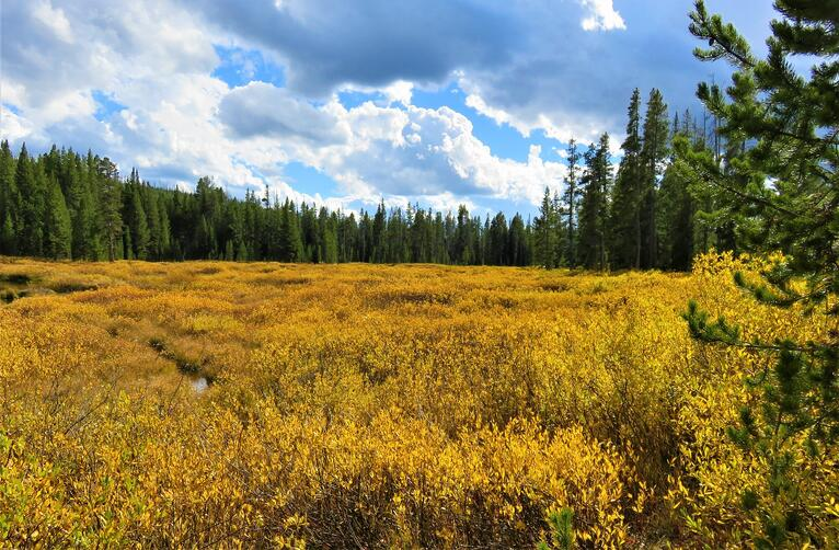 12 nonprofits working for our lands
