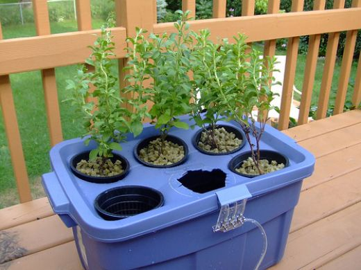 Start a Hydroponic Garden: Tips for Beginners