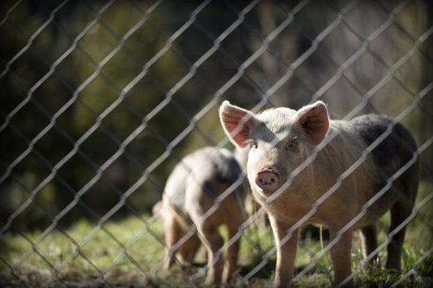 Vleesconsumptie duurzaam verminderen