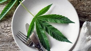 Marijuana-Leaf-served-on-plate-cannabis-coconut-oil-recipes-4/20-celebrate-at-home