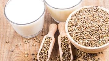 Hemp-seeds-and-hemp-milk-fresh-and-homemade