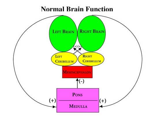 Brain Normal Function Normal-brain-function-color21